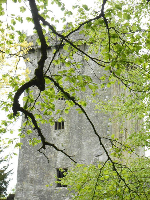 view of Blarney Castle through tree branches covered in bright green leaves